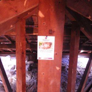 TERCAP réalise le traitement contre les vrillettes et les capricornes à Pau en Béarn