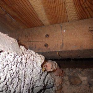 TERCAP réalise le traitement des bois contre les vrillettes et les capricornes à Pau dans le Béarn